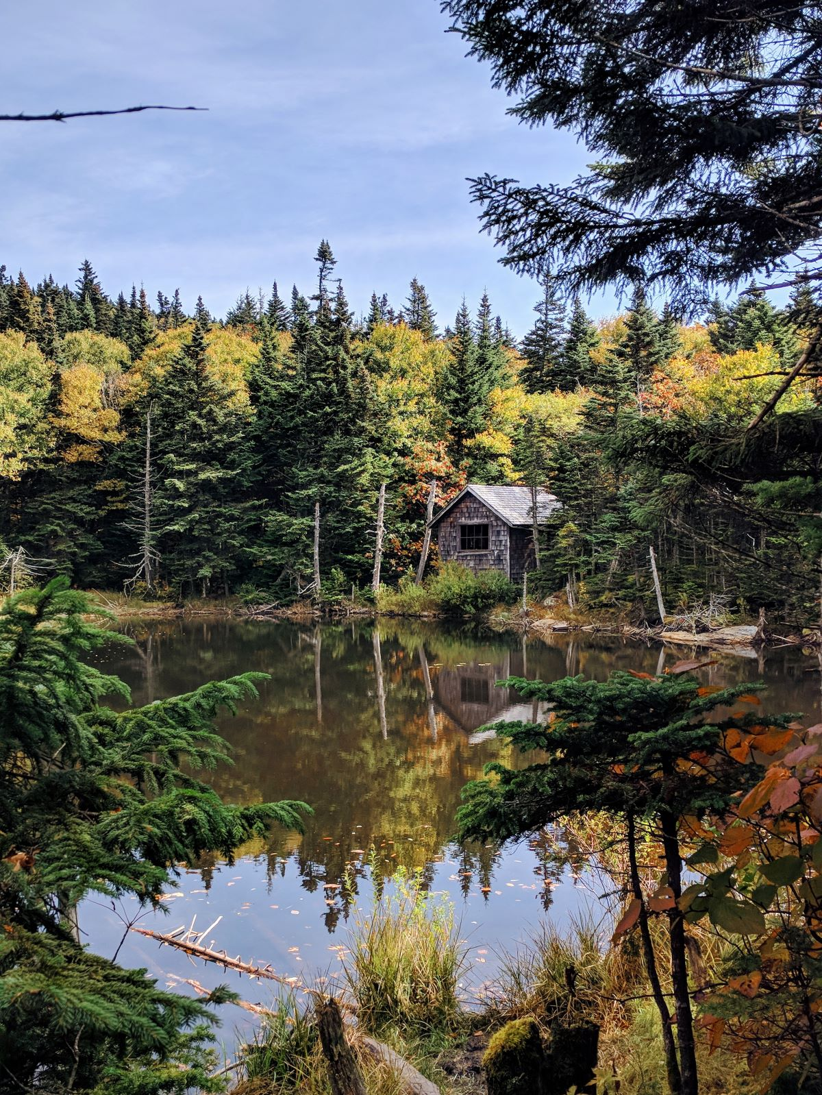 Mt Greylock hiking trail - cabin in the woods across the pond, surrounded by evergreens