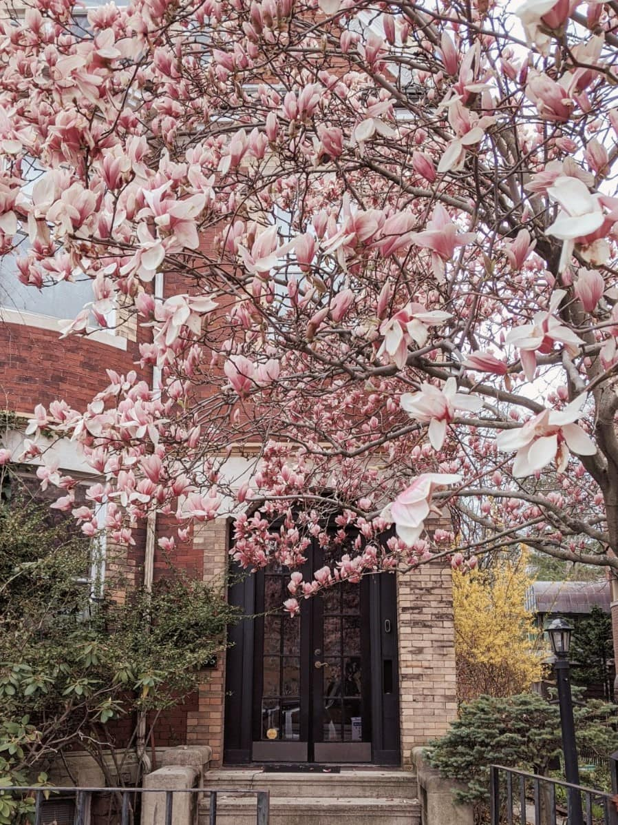 magnolias in front of a gated home entrance