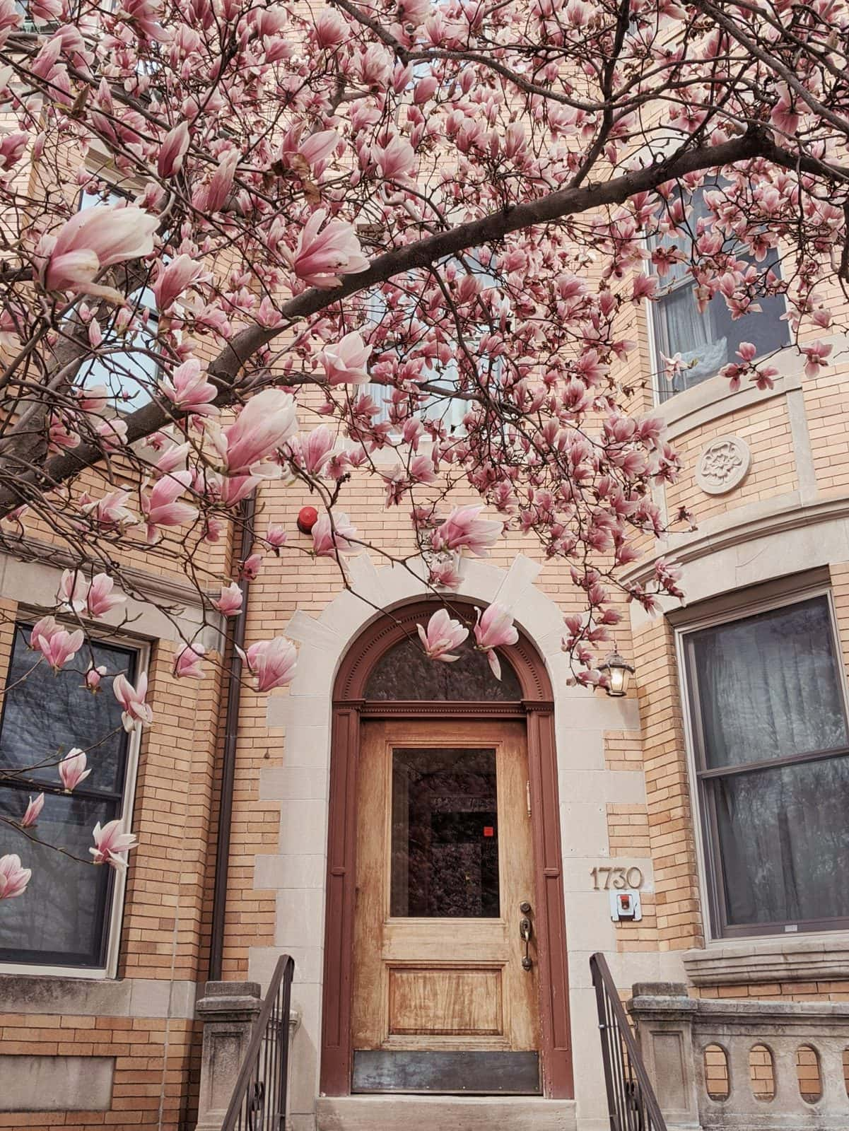 magnolias in front of a yellow brick building and arched door