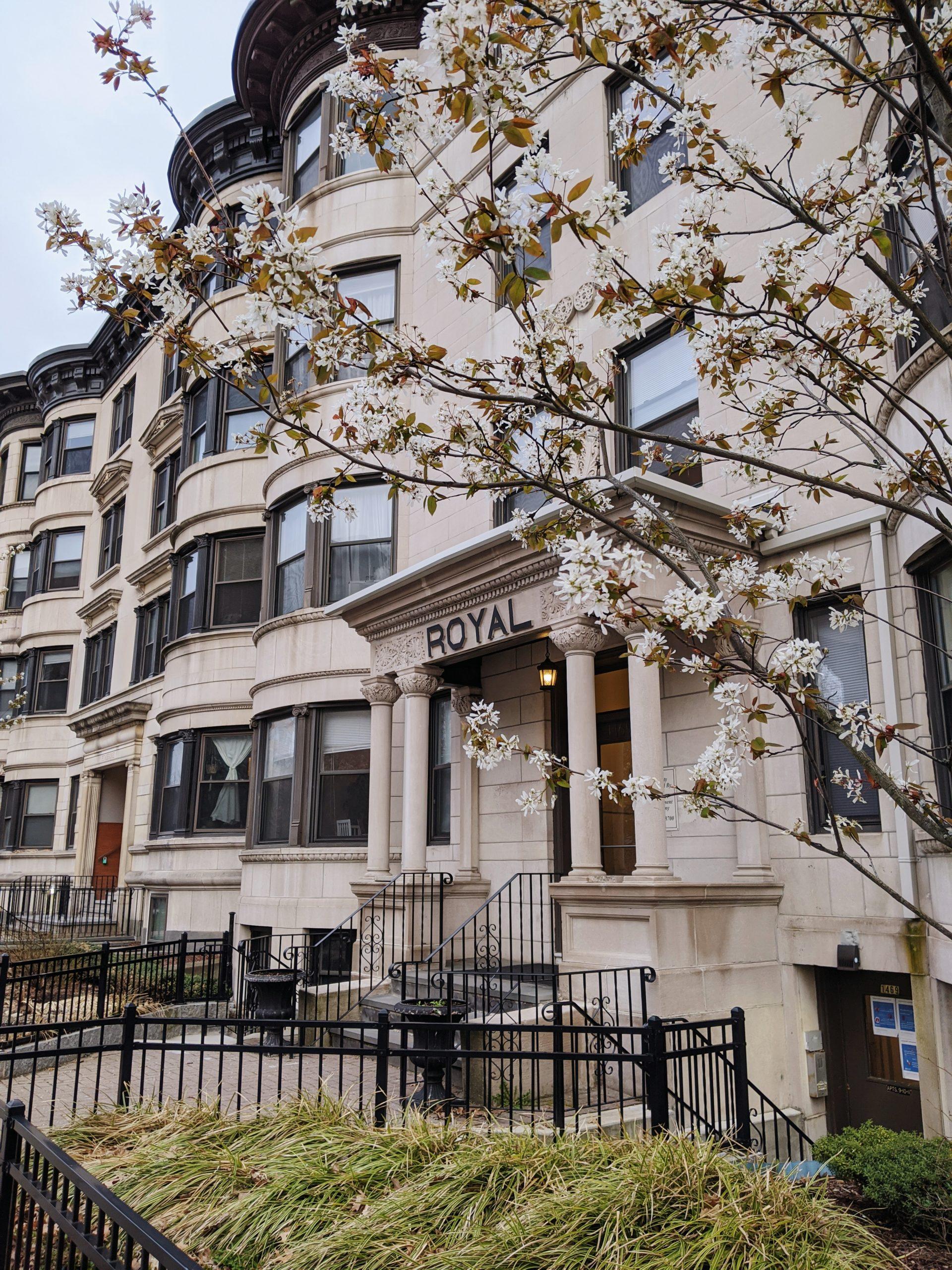 White stone apartment building in Brookline framed by late spring cherry blossoms