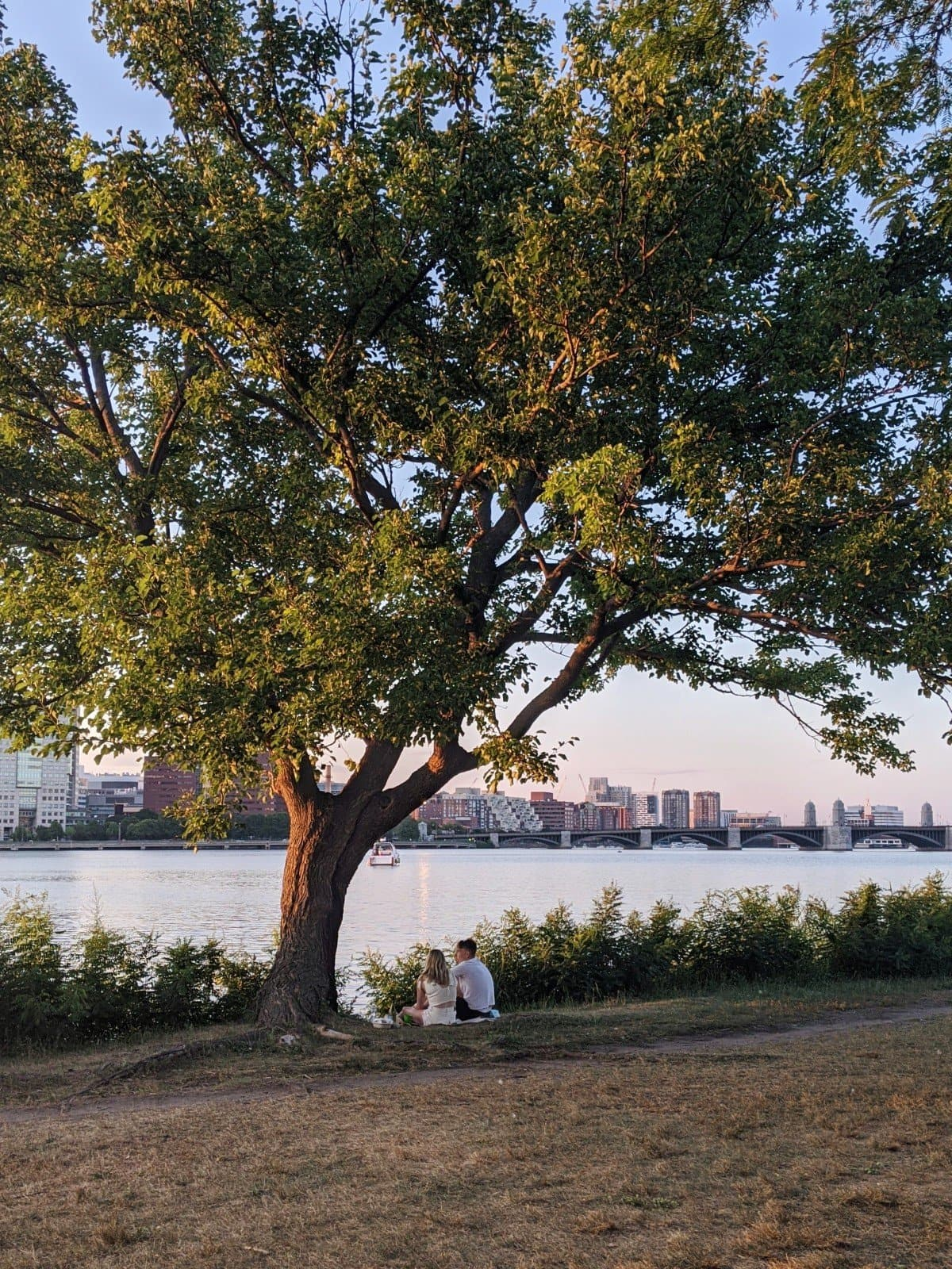 a couple under a tree in front of the Charles River at sunset, photo by Roaming Boston