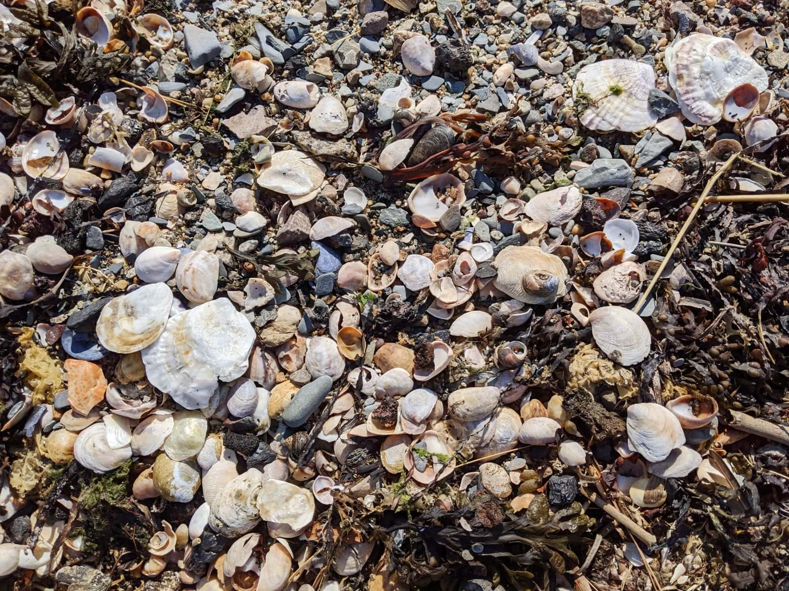 Seashells and pebbles on Spectacle Island beach